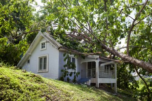 How to deal with a fallen tree in Gilbert, AZ