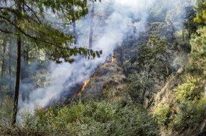 Wildfire Prevention in Gilbert, AZ