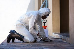 Pest Control Exterminator Insurance Arizona