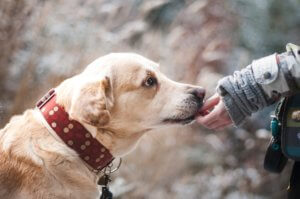 Liability Insurance for Dog Bite Claims in Gilbert, AZ